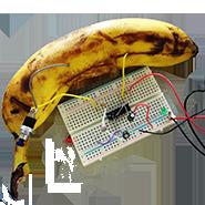 Bananencircuit
